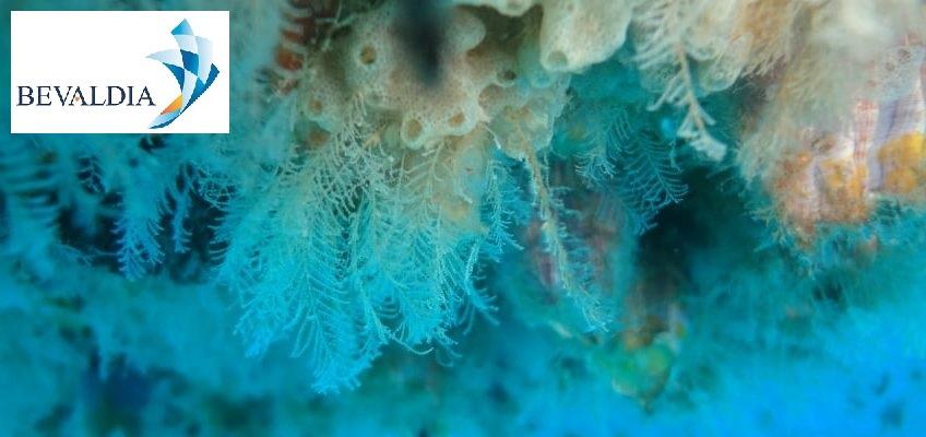 Underwater services company Lome, Piraeus, Globally BEVALDIA PSOMAKARA