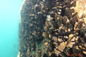 Underwater-vertical-cleaning