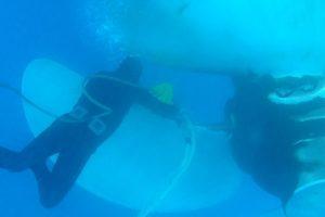 Underwater-propeller-polishing-3