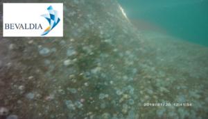 In water class survey El Dekheila, Egypt BEVALDIA PSOMAKARA