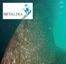 Underwater class inspection Tuxpan, Mexico BEVALDIA PSOMAKARA