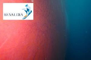 UNDERWATER HULL CLEANING PIRAEUS AND LOME AND GLOBALLY - BEVALDIA - PSOMAKARA 11