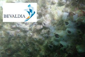 Underwater hull cleaning, Kamsar, Guinea BEVALDIA PSOMAKARA
