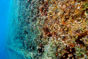 IN WATER HULL CLEANING (BEVALDIA-PSOMAKARA)
