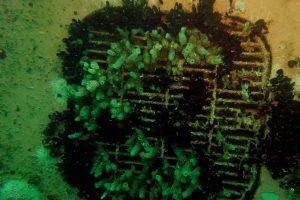 IN WATER SEA CHEST CLEANING (BEVALDIA-PSOMAKARA) 3