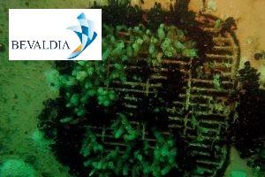 Underwater seac hest cleaning Lome Piraeus worldwide BEVALDIA
