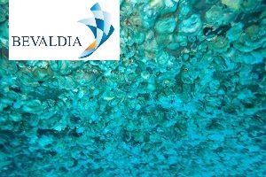 In Water Hull Cleaning Machine (BEVALDIA-PSOMAKARA) 3