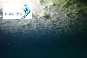 UNDERWATER HULL CLEANING LAS PALMAS SPAIN BEVALDIA 19