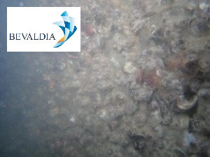 UNDERWATER HULL CLEANING AND PROPELLER POLISHING KAMSAR, GUINEA
